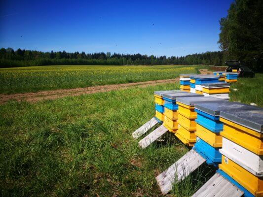 bičių šeimų pervežimas