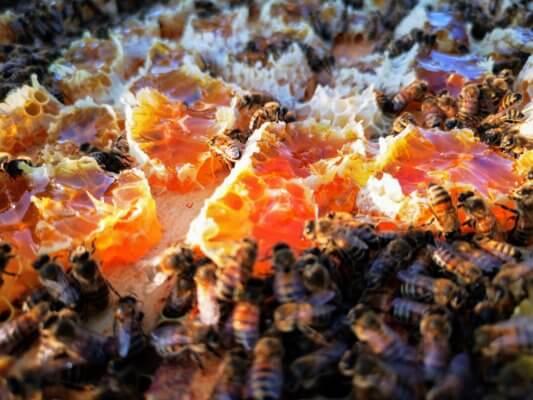 bitės lankomiausi nuomininkai