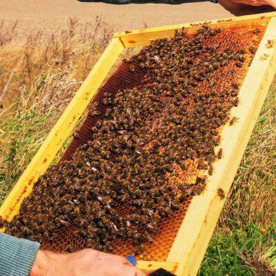 bičių duoneles vartojimas